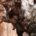 Le minotaure, Europé. Oeuvre originale: tirage Fine Art de l'artiste Christian Broise