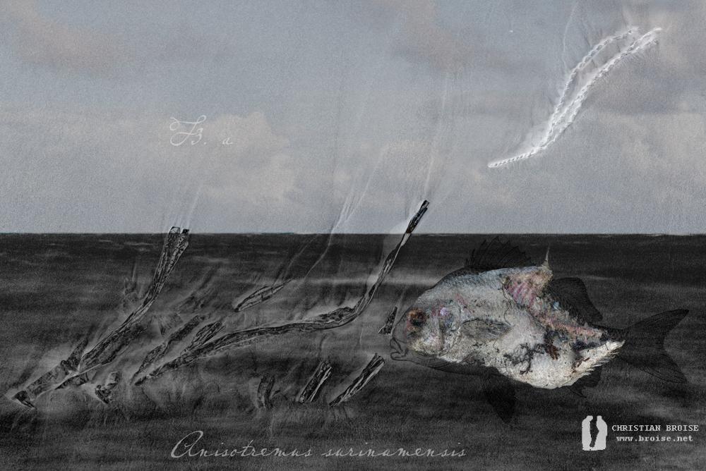 Projet en cours. Oeuvre originale: tirage Fine Art de l'artiste Christian Broise
