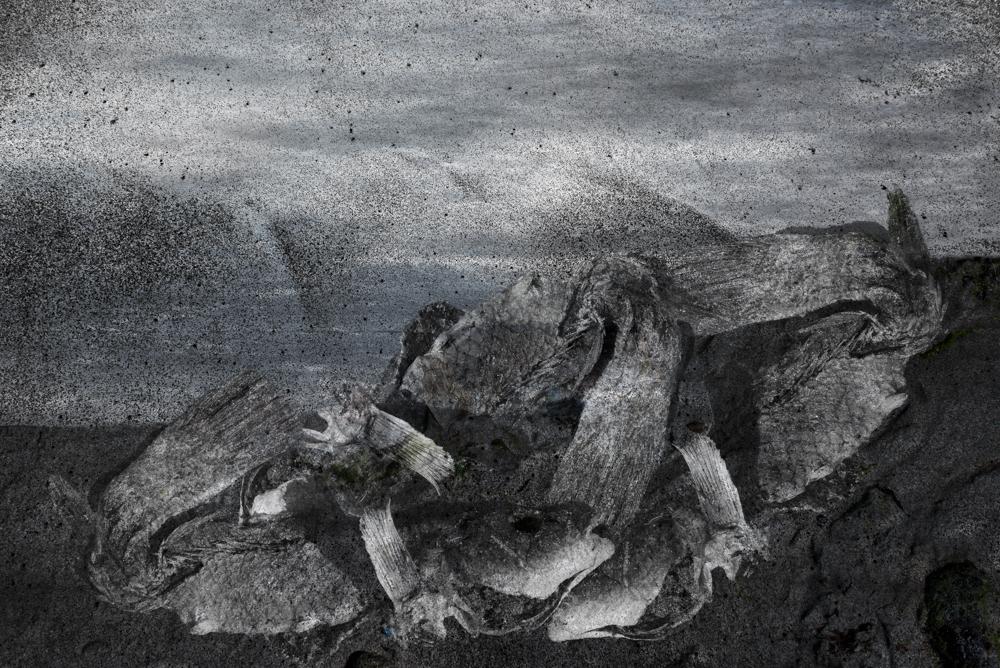Labrus. Oeuvre originale: tirage Fine Art de l'artiste Christian Broise