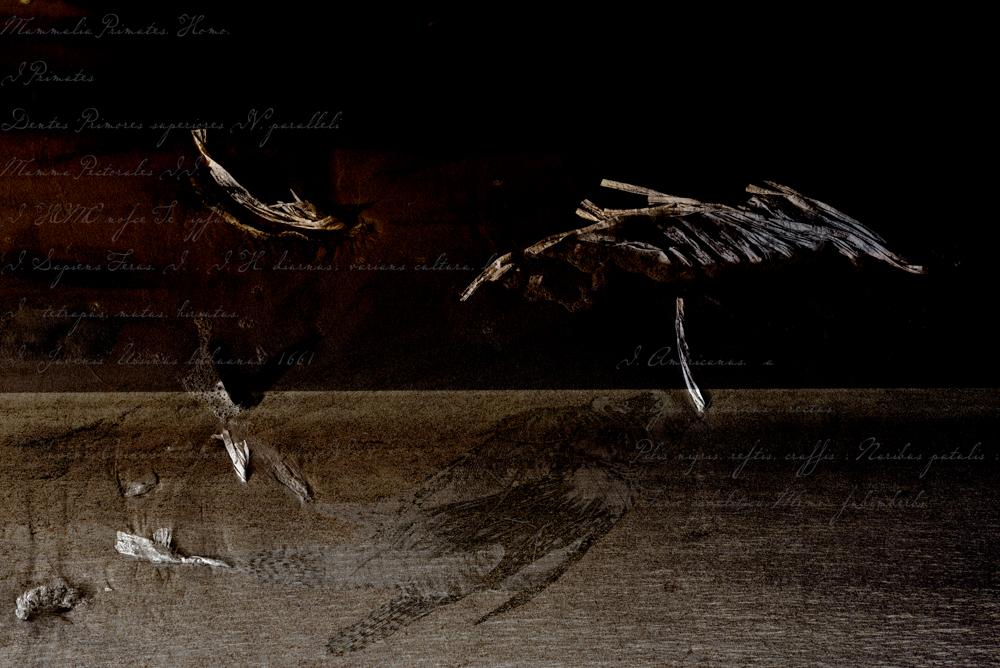 Pterois volitans. Oeuvre originale: tirage Fine Art de l'artiste Christian Broise