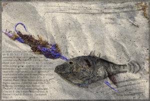 Balistre monocéros. Oeuvre originale: tirage Fine Art de l'artiste Christian Broise