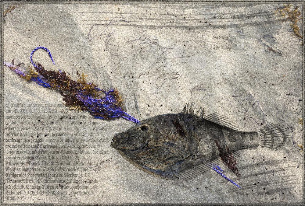 Balister unicornu. Oeuvre originale: tirage Fine Art de l'artiste Christian Broise